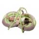 BABYMOOV žaislas-kilimėlis PEANUT